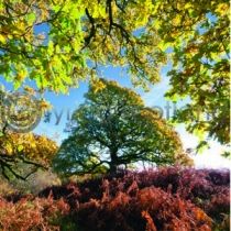 Three Oaks Colour Photo Greetings Card