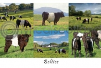 Belties Composite Postcard (HA6)