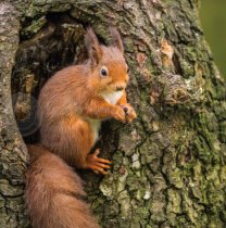 Red Squirrel Colour Photo Greetings Card