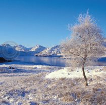 Winter Loch Arklet & Arrochar Colour Photo Greeting Card(LY)