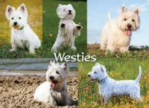 Westies Composite Magnet (H LY)