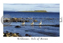 Three Geese At Kildonan Postcard (HA6)