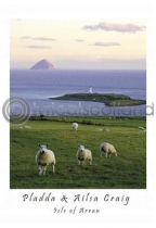 Pladda Sheep & Ailsa Craig Postcard (V A6 LY)