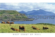 Highland Cattle & Ben More Range Postcard (H A6 LY)