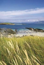 Dune Grass At Iona's North Postcard (V A6 LY)