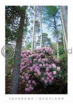 Inverewe Gardens - Scotland Postcard (V A6 LY)