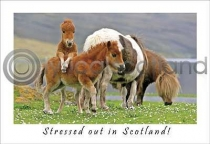 Stressed Out In Scotland Postcard (H A6 LY)