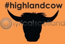 #highlandcow postcard (H A6 LY)