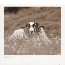Blackface Tup In Meadow Sepia Greetings Card (LY)
