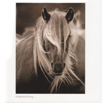 Highland Pony Sepia Greetings Card