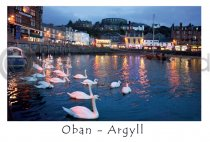 Oban Harbour, Swans Postcard (HA6C)