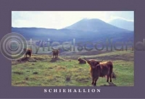 Schiehallion & Highland Cattle (HA6C)
