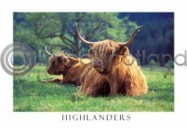 Highlanders in Glen Nevis Postcard (H A6 LY)