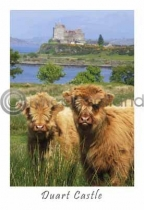 Two Calves at Duart Castle Postcard (VA6)