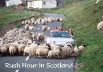 Rush Hour in Scotland Magnet (H LY)